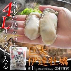 特大 『伊達牡蠣』 約1kg (解凍後約850g) 20粒前後 ※冷凍 sea ☆|tsukijiichiba