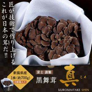新潟県産 黒舞茸『真』 1株(約700g) 化粧箱 ※冷蔵|tsukijiichiba