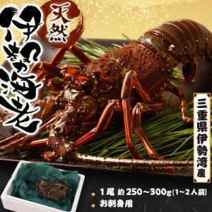 伊勢海老 イセエビ いせえび 三重県伊勢湾産 1尾 250〜300g 冷凍 送料無料 tsukijiichiba