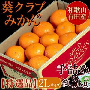 和歌山・有田産 高級手詰めみかん『葵クラブの蜜柑』【特選品】1箱 約3キロ 2Lサイズ ※3箱まで同梱可|tsukijiichiba