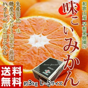 みかん ミカン 和歌山県産 早和果樹園の 味こいみかん S〜L 約3kg 送料無料|tsukijiichiba