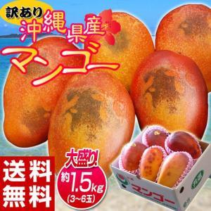 《送料無料》訳有り『沖縄産マンゴー』 大ボリュームの約1.5...