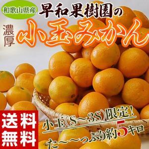 送料無料 和歌山県産 早和果樹園の小玉みかん S〜3Sサイズ限定 約5kg|tsukijiichiba