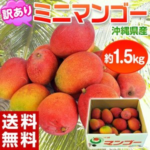 《送料無料》沖縄産 ミニマンゴー 約1.5kg 多少の訳あり...