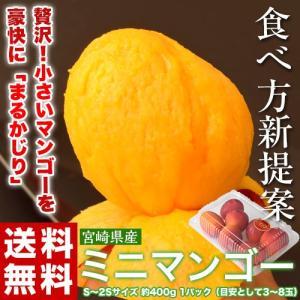 マンゴー 宮崎県産 ミニマンゴー 約400g 目安として3〜8玉 送料無料 tsukijiichiba