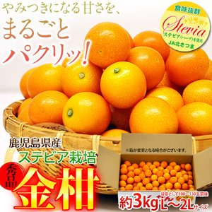 《送料無料》鹿児島県産 ステビア栽培きんかん L〜3Lサイズ 約2kg frt ○|tsukijiichiba