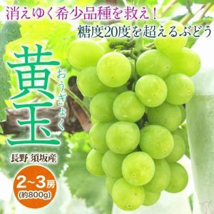 長野県産 『黄玉ぶどう』 約800g(2〜3房) ※冷蔵 frt ☆|tsukijiichiba