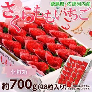 いちご 送料無料 徳島県佐那河内産「さくらももいちご」化粧箱 28粒 約700g ※冷蔵|tsukijiichiba