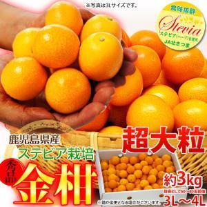 金柑 鹿児島県産 ステビア栽培 きんかん 超大粒 3L〜4L 約2kg 送料無料|tsukijiichiba