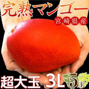 マンゴー 宮崎県産 超大玉 マンゴー 3L ×5玉(1玉:450〜509g) 送料無料 tsukijiichiba