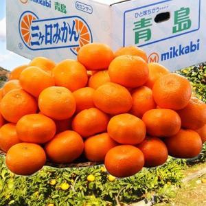 みかん 送料無料 静岡産 三ヶ日みかん(青島種) 3〜4Lサイズ 約8kg|tsukijiichiba
