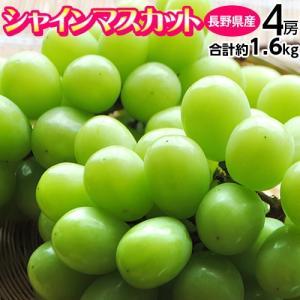 ぶどう ブドウ 葡萄 長野県産 シャインマスカット 4房 計約1.6kg 送料無料|tsukijiichiba