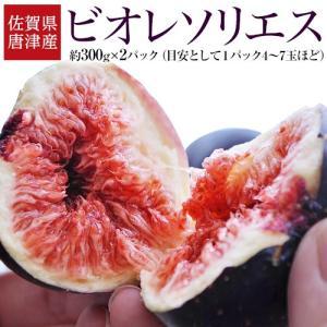 佐賀県産 高糖度いちじく 「ビオレソリエス」 2パック (1パック約300g) ※冷蔵
