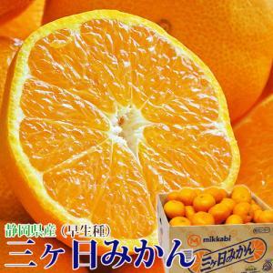 みかん ミカン 蜜柑 柑橘 静岡県 三ケ日 早生 約8kg 大玉 3L 送料無料 常温