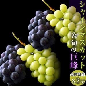 ぶどう 葡萄 ブドウ 長野県産「シャインマスカット2房&巨峰2房」合計4房約1.5kg 送料無料|tsukijiichiba