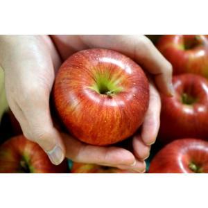 りんご リンゴ 林檎 長野県 安曇野 シナノスイート 約5キロ 送料無料 常温|tsukijiichiba