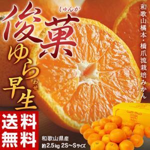 送料無料 橋爪俊典さんの『俊菓みかん』 和歌山産 S〜2S 約2.5kg ※常温・産地直送|tsukijiichiba