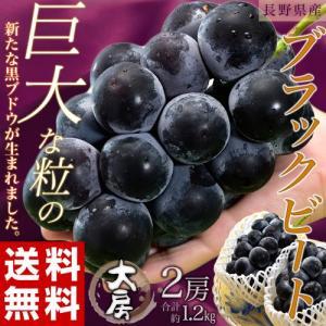 送料無料 長野産 大粒ぶどう ブラックビート 大房 2房 合計1.2kg ※常温もしくは冷蔵|tsukijiichiba