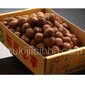 『石川小芋』静岡産 秀品 Mサイズ 約2kg ○|tsukijiichiba
