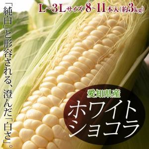 ≪送料無料≫愛知県産 トウモロコシ『ホワイトショコラ』 約3kg 8〜11本 ※冷蔵 ☆|tsukijiichiba