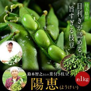 埼玉県産 鈴木智之さんの葉つき枝豆「陽恵(ようけい)」 約350g×3袋(さやの重量で合計約1kgになるようにお詰めします。)☆|tsukijiichiba