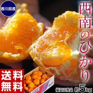 みかん 柑橘 香川県産 新品種のみかん 西南のひかり 約5kg 秀〜優品 M〜3Lサイズ 送料無料|tsukijiichiba