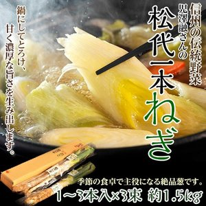 ねぎ ネギ 野菜 長野県産 伝統野菜認定 松代一本ねぎ 鍋に最適 1箱 1〜3本入×3袋 約1.5kg|tsukijiichiba