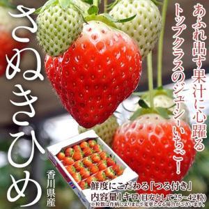 いちご イチゴ 香川県産 つる付き さぬきひめ 約1kg(目安として25〜42粒) 送料無料※冷蔵 tsukijiichiba