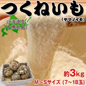 北海道・十勝高島産 『つくねいも』 (ヤマノイモ)  約3kg M〜Sサイズ(7〜18玉) ☆|tsukijiichiba