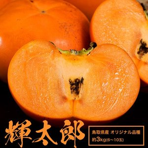 送料無料 鳥取県産 新品種甘柿「輝太郎(きたろう)」大玉 約3kg(6〜10玉)|tsukijiichiba
