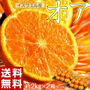 神秘の柑橘 オアオレンジ イスラエル産 約2kg×2箱セット(合計28〜40玉前後) 送料無料 fr...