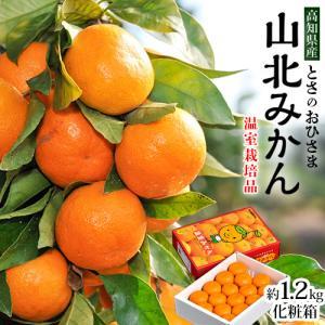柑橘 みかん 高知県産 山北みかん とさのおひさま ハウス栽培 化粧箱入り 約1.2キロ 送料無料|tsukijiichiba