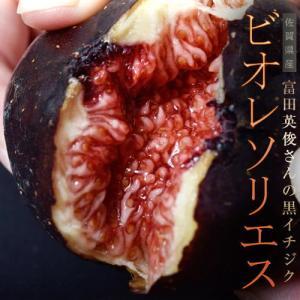 佐賀県産 富田秀俊さんの黒イチジク「ビオレソリエス」 約300g(3〜8玉)×2P ※冷蔵・産地直送