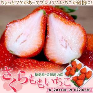 いちご 苺 イチゴ 訳あり さくらももいちご 徳島県佐那河内産 A〜2A又はL〜2L 約220g×2パック ※冷蔵 tsukijiichiba