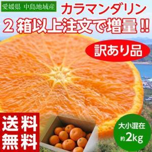 《送料無料》大量入荷!訳ありみかん「カラマンダリン」 愛媛県...