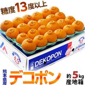 柑橘 みかん 糖度13度選別 熊本県産 デコポン 約5kg 15〜24玉 送料無料|tsukijiichiba