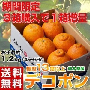 送料無料 熊本県産 デコポン 約1.2kg(4〜6玉) 【3箱買えば1箱オマケ】 ※常温|tsukijiichiba