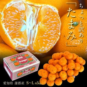 みかん ミカン 柑橘 愛知県蒲郡産 訳あり たまみ 約5kg S〜Lサイズ 送料無料|tsukijiichiba