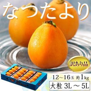 びわ 枇杷 長崎県産 なつたより 訳あり品 大粒3〜5L 12〜16玉 約1kg 送料無料 ※冷蔵|tsukijiichiba
