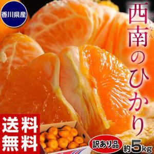 みかん 柑橘 訳あり品 新品種 香川県産 西南のひかり 約5kg (M〜3L) 送料無料 tsukijiichiba