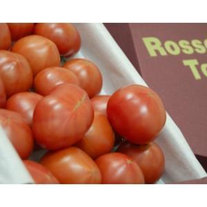 形状不揃い『ロッソトマト』 愛知産 2S〜2Lサイズ 1.2kg  ○ tsukijiichiba