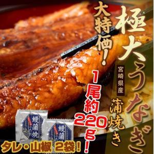 宮崎県産「極大うなぎ蒲焼き」1尾 約220g タレ・山椒2袋 ※冷凍 sea ☆|tsukijiichiba