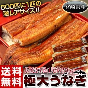 《送料無料》宮崎県産 極大うなぎ 3尾(1尾約270g) ※冷凍 sea ☆|tsukijiichiba