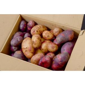 訳あり 送料無料 じゃがいも 長崎 【雲仙うららかファーム】 幻のジャガイモ3種混載 「マゼラン・彦星・ペチカ」 サイズ混合 計約3.5kg|tsukijiichiba