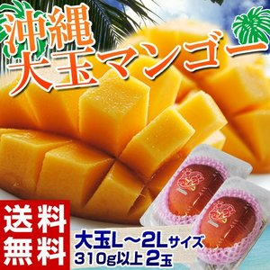 フルーツ マンゴー 沖縄県産 マンゴー 2玉 L〜2Lサイズ (1玉:310g以上) 送料無料 tsukijiichiba
