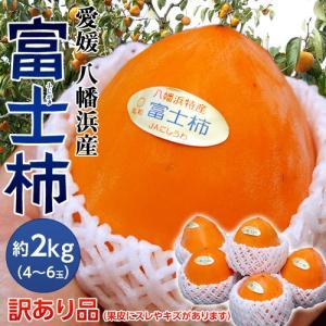 柿 かき カキ 柿 愛媛県産 訳あり 富士柿 4〜6玉 約2kg 送料無料|tsukijiichiba