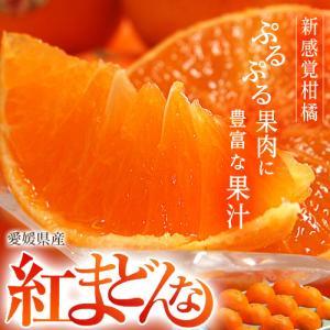 ギフト お歳暮 贈答 柑橘 紅まどんな 愛媛県産 化粧箱 L〜3L 約3kg (10〜15玉) 送料無料|tsukijiichiba