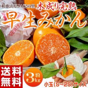 みかん ミカン 柑橘 和歌山県紀の里産 完熟 袋掛けみかん 小玉 s〜2s 約3kg 常温 送料無料|tsukijiichiba