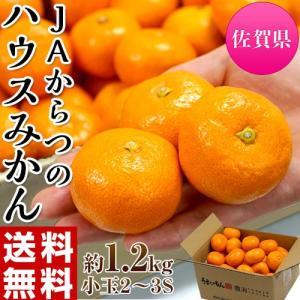 柑橘 みかん 佐賀県産 JAからつ 小玉みかん 2〜3Sサイズ 約1.2キロ 化粧箱 送料無料