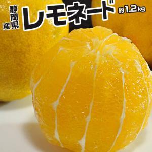 《送料無料》柑橘 静岡県産 「レモネード」 約1.2kg 2S〜2Lサイズ ※常温 frt〇...